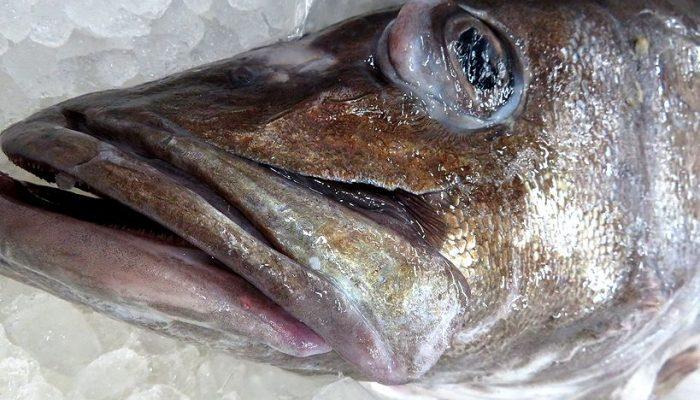 超高級魚!あら、アラ、登場。 | 横浜丸魚株式会社