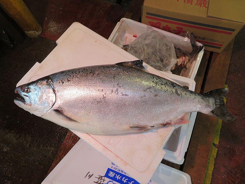 青森県より、板マス級が入荷し始めました。 | 横浜丸魚株式会社
