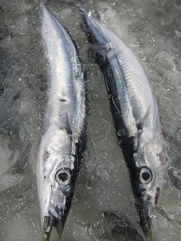秋刀魚 値段